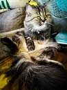 Cat in living room Royalty Free Stock Photo