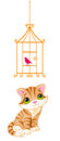 Cat looking at the bird cage on white Stock Image