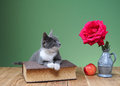 Cat looking at a red rose on the table Royalty Free Stock Images