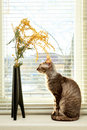 Cat looking vase against venetian window blinds Stock Photo
