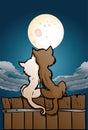 Cat lover in love