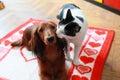 Cat loves dog Royalty Free Stock Photo