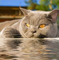 Cat lying near the water Royalty Free Stock Photo