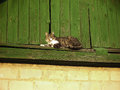 Cat lying on the roof Royalty Free Stock Photo
