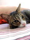 Cat lying on sheet bed looking sad Royalty Free Stock Photography