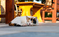 Cat lying in the street near cafe table sunny day Royalty Free Stock Photos