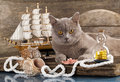 Cat and marine sailboat Royalty Free Stock Images