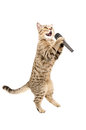 Cat with microphone