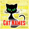 Cat names represents pedigree pets and felines indicating kitty feline identity Stock Photo