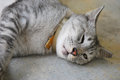 Cat Nap Stock Photography