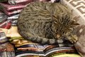Cat nap a stray napping on blankets in the pisac market in peru Stock Photos