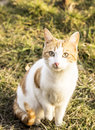 Cat in nature ,green grass Royalty Free Stock Photo
