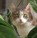 Cat near leaves of plants Stock Images