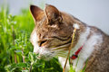 Cat on nepeta cataria Royalty Free Stock Images