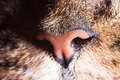 Photo : Cat nose and whiskers closeup  on