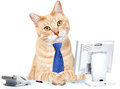 Cat in the office businessman with computer and a telephone Royalty Free Stock Image