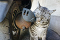 Cat and old motorcycle exhaust pipes Royalty Free Stock Photo