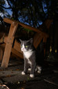Cat outdoors at night in autumn gray and white the fall or halloween Royalty Free Stock Images