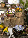 Cat with pansies in garden setting beautiful Royalty Free Stock Images