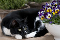 Cat with pansies in garden setting on table Stock Photos
