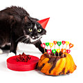 Cat with party hat and birthday gifts cake gift isolated on white Stock Image