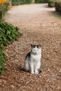 Cat on the path Royalty Free Stock Photo