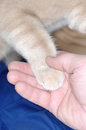 Cat paw and human hand Stock Image