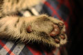 Cat paw leather pads on furry Royalty Free Stock Photography