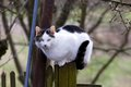 Cat perched on country fence healthy a wooden looks at the camera attentively Stock Images