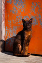 Cat pet sits in front of a door with peeling red paint Stock Photos