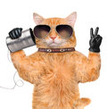 Cat on the phone with a can Royalty Free Stock Photo