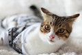Cat photo of cute wearing xmas costume Royalty Free Stock Photography