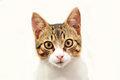 Cat photo of cute on white background Stock Photos