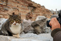 Cat and photographer taking photo of on the stone Stock Photography