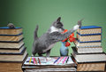 Cat is played with plush mouse and book Stock Photo