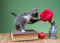 Cat playing with flower roses on the table Stock Image