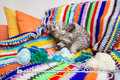 Cat playing with yarn colorful balls of on sofa Royalty Free Stock Photography