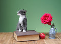 Cat plays with an apple and flowers on the table Stock Photo