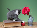 Cat plays with an apple and flowers on the table Royalty Free Stock Images