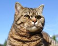 Cat portrait Royalty Free Stock Photo