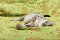 Cat portrait close up, cat resting in the bed and looking left, domestic young cat in green background with space for advertising Royalty Free Stock Photo