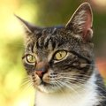 Cat portrait close up of in the garden selective focus Royalty Free Stock Image