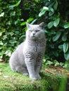 Cat posing Stock Image