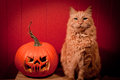 Cat posing with Jack-O'-Lantern Stock Photo