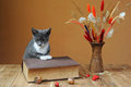 Cat posing next to books and flowers in the studio Stock Photos