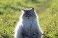 A cat posing for photos enyoing the afternoon sun Stock Photos
