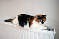 Cat on radiator relaxing a hot Royalty Free Stock Photography