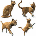 Cat-Red Tabby Royalty Free Stock Image