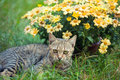 Cat relaxing on flower lawn Royalty Free Stock Photo