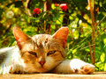 Cat relaxing in the garden Royalty Free Stock Photo